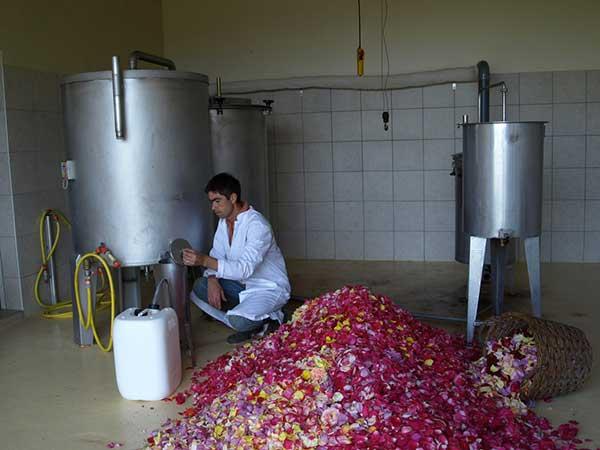terre de rosee distillerie